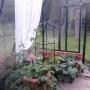 40 m² växthus invändigt